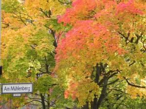 Am Mühlenberg, Berlin-Schöneberg, Rathaus Schöneberg, Rudolph-Wilde-Park, Volkspark Wilmersdorf