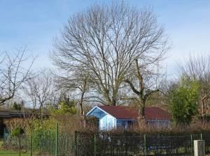 Kleingartenanlage Schlachtensee Süd (2017) KGA Schlachtensee Süd,