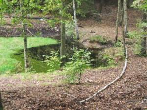 Tatarenteich, Forst Düppel