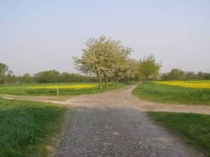 Allee in den Rieselfeldern Spandauer Weg Etappe 2, Dorf Gatow bis Fort Hahneberg