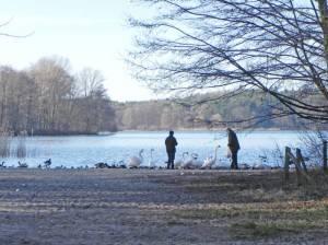 Lieper Bucht (2014) Lieper Bucht, Berlin-Nikolassee, Grunewald, Lindwerder, Havelchaussee