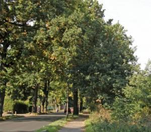 Benschallee (2008) Benschallee, Berlin-Nikolassee, Kleingartenanlage Schlachtensee Süd, Mauerweg, Stammbahn
