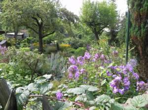 Kleingartenanlage Wiesengrund (2012) KGA Wiesengrund, Friedrichshagen, Erpe, Neuenhagener Mühlenfließ, Mittelheide