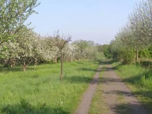Barnimer Dörferweg Etappe 2, Lübars (Bus 222) – S-Bahnhof Karow