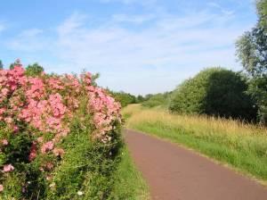 Wanderweg durch die Spektewiesen Spektewiesen, Berlin-Spandau, Spektegrünzug, Spektlake