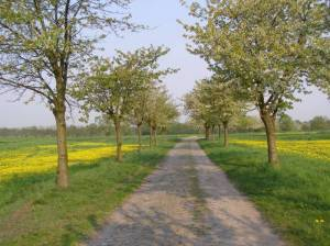 Kirschenallee Rieselfelder, Gatow