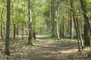 Kneippweg Kneippweg, Düppeler Forst