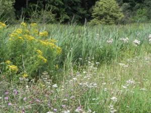 Wuhletal (2012) Wuhletal-Wanderweg, Landschaftspark Wuhletal, Wuhlegarten, Wuhlesee, Spree