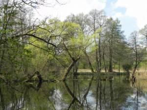 Stolper Heide (2014) Stolper Heide, Oder-Havel-Kanal, Vogelschutzgebiet, Wasserwerk Stolpe