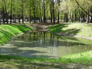 Edelteich im Joseph Brix – Felix Genzmer – Park (2016) Edelteich, Berlin-Frohnau, Joseph Brix – Felix Genzmer – Park