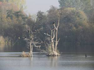 Inselteich mit Insel (2015) Inselteich, Berlin-Französisch Buchholz, Karower Teiche
