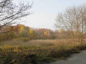 Buschgrabenniederung mit Schichtholzhecke (2011) Buschgrabenniederung, Kleinmachnow, Buschraben, Mauerweg