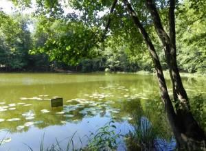 Regenbogensee (2013) Regenbogensee, Wandlitz-Lanke, Drei Heilige Pfühle, Liepnitzsee