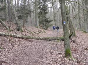 66-Seen-Wanderweg, im Michendorfer Wald (Foto: 2014) 66-Seen-Wanderweg, vom Bahnhof Ferch-Lienewitz bis zum Bahnhof Pirschheide, Lienewitzer Seen, Caputher See, Fährhaus Caputh, Schloss Caputh, Einsteinhaus, Braumanufaktur