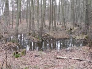 Lienewitz-Caputher Seen- und Feuchtgebietskette (2014) Lienewitz-Caputher Seen- und Feuchtgebietskette, Lienewitzer Seen, Seen- und Wurzelfenn