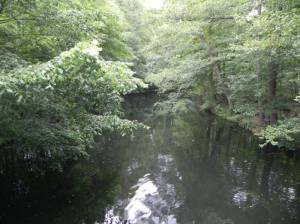 Alte Löcknitz, Erkner, Löcknitzinsel, Froschbrücke, Wupatzsee, Heidereutersee