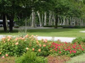 Rosengarten im Treptower Park (2014) Rosengarten, Berlin-Alt-Treptow, Treptower Park