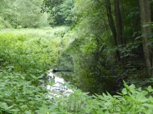 Naturschutzgebiet Kindelfließ-Springluch, Bieselfließ (2014) Naturschutzgebiet Kindelsee-Springluch, Bieselfließ, Kindelfließ, Bayernsee, Kindelsee