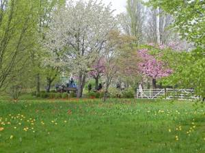 Britzer Garten, Tulipan (2015) Britzer Garten, Berlin-Britz,
