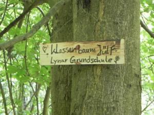 Klassenbaum der Lynar-Grunschule im Spandauer Forst (2015) Lynar-Grundschule, Berlin-Spandau,