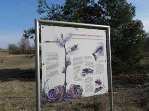 Bienenweide in Blankenfelde (2015) Bienenweide, Berlin-Blankenfelde, Köppchensee, Niedermoorwiesen am Tegeler Fließ