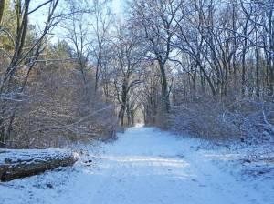Auf dem Weg von Werder nach Potsdam (2016) Von Werder nach Potsdam, Großer Zernsee, Wildpark, Park Sanssouci
