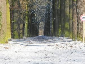 Eichenallee (2016) Eichenallee (Waldweg), Wildpark, Großer Stern
