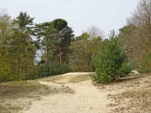 Naturschutzgebiet Baumberge (2016) Tegeler Forst, Tegeler See, Schaustelle Sturm, Dicke Marie, Baumberge