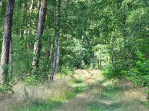 Naturschutzgebiet Krumme Lake -  Pelzlake, Wanderweg (2016) Naturschutzgebiet Krumme Lake – Pelzlake,