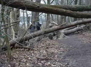 Wanderweg um den Schmöckwitzer Werder, Sturmschäden (2018) Um den Schmöckwitzer Werder, Zeuthener See, Krossinsee, Oder-Spree-Kanal