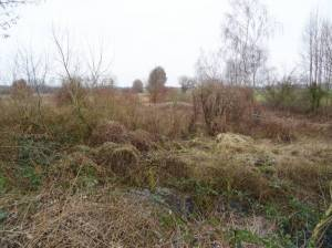 Natürlandschaft in Blankefelde (2018) Blankenfelde,